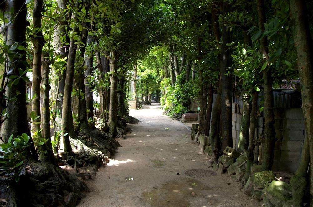 備瀬のフクギ並木|沖縄旅行おすすめイメージ