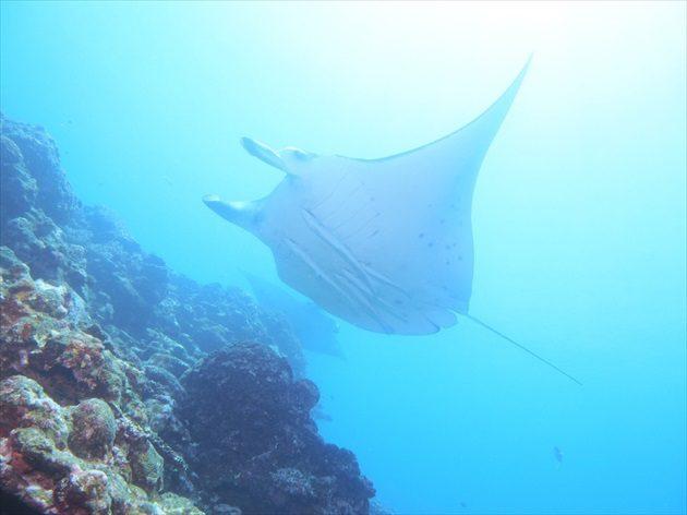 沖縄旅行でダイビングイメージ