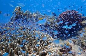珊瑚礁の聖地で潜る!座間味島でダイビングの魅力とは?