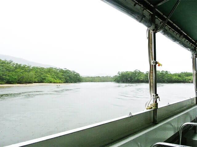 マングローブの風景