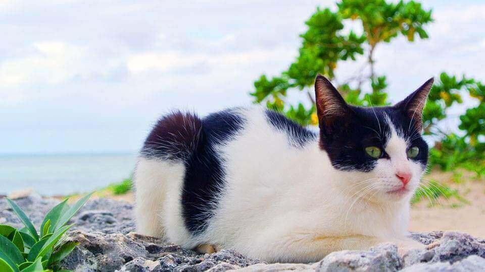 コンドイ浜 猫