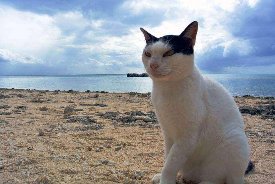 コンドイ浜 猫3