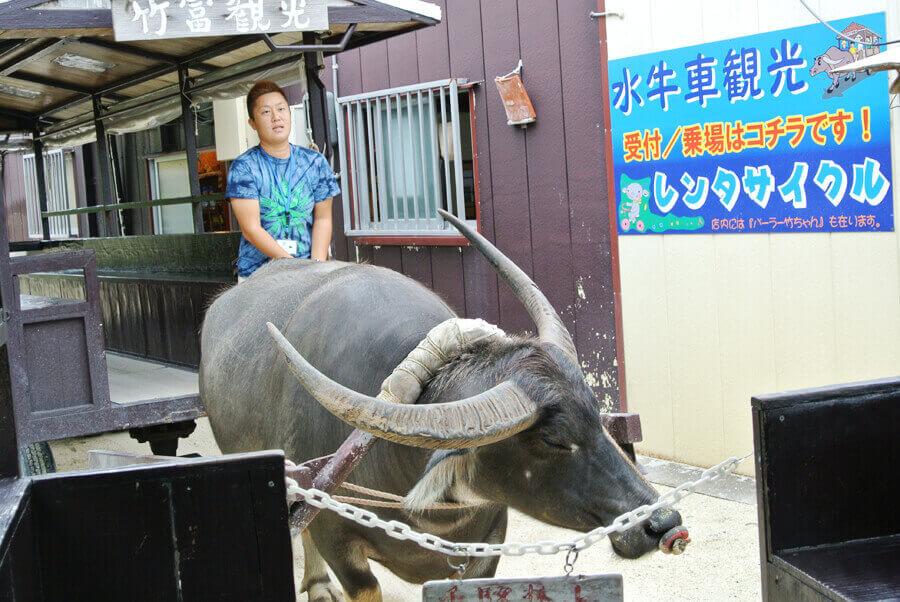 竹富島 水牛観光