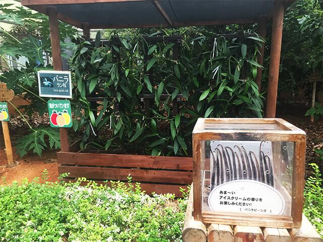 おきなわワールド フルーツ農園2