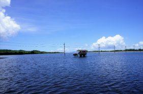 海を渡る水牛車に乗って由布島へ…南の島の小さな楽園!