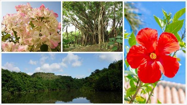 沖縄の自然 イメージ