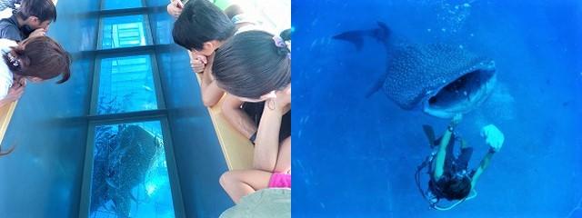 幼児もできる沖縄アクティビティジンベエパーク遊覧ツアー