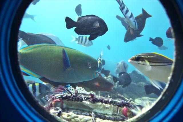 沖縄のグラスボートブセナ海中公園1