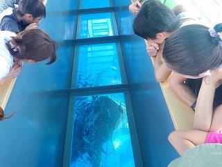 沖縄でグラスボートに乗ろう!