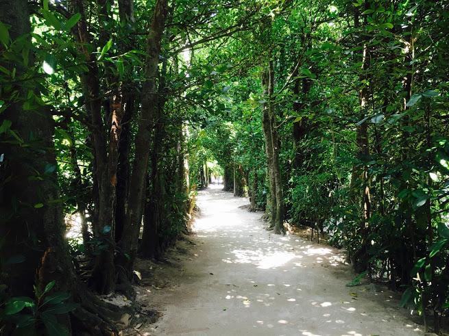 沖縄のパワースポット「フクギ並木」観光の楽しみ方を教えます!