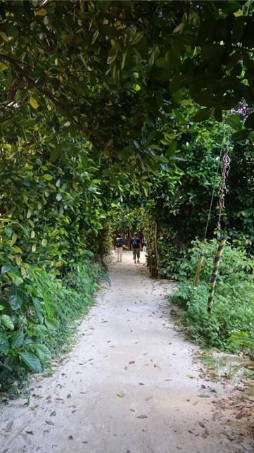 フクギ並木 観光