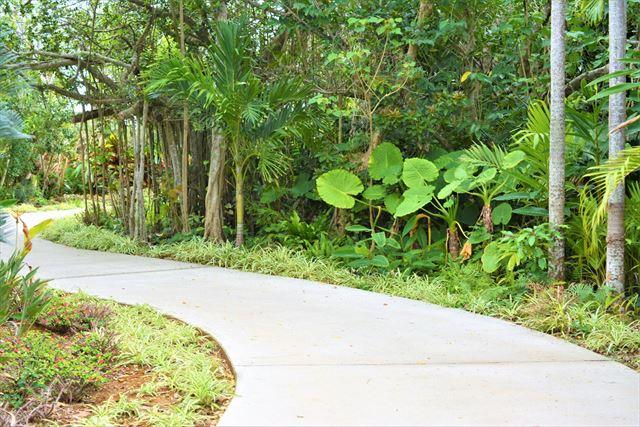 まいぱり 宮古島熱帯果樹園 道
