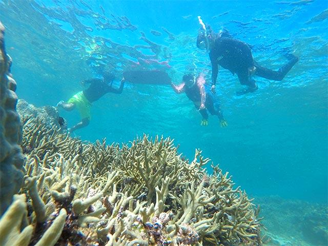 珊瑚たっぷりとっておきのポイントにお連れします