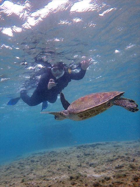 宮古島 ウミガメ