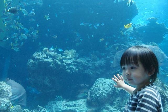 赤ちゃんと楽しむ沖縄