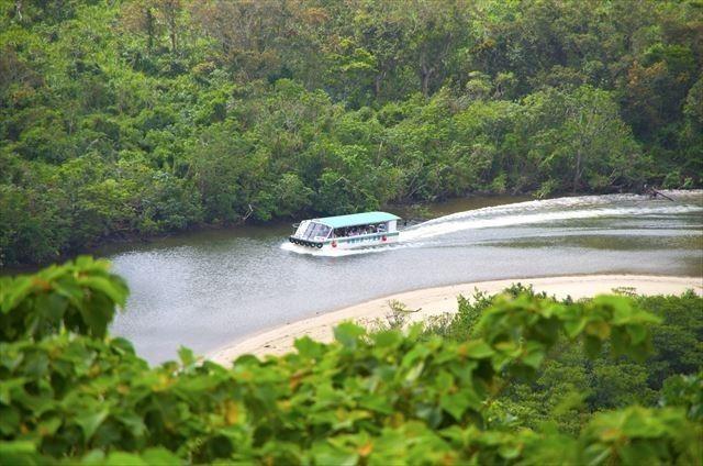 西表島 マングローブ林