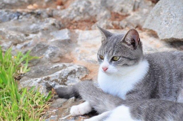 黒石の森の猫