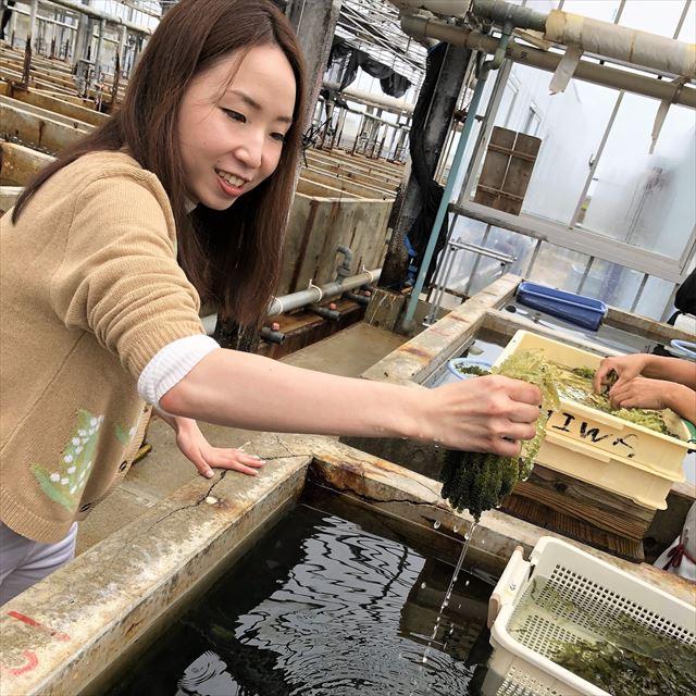 海ぶどう養殖 久米島海洋深層水開発株式会社