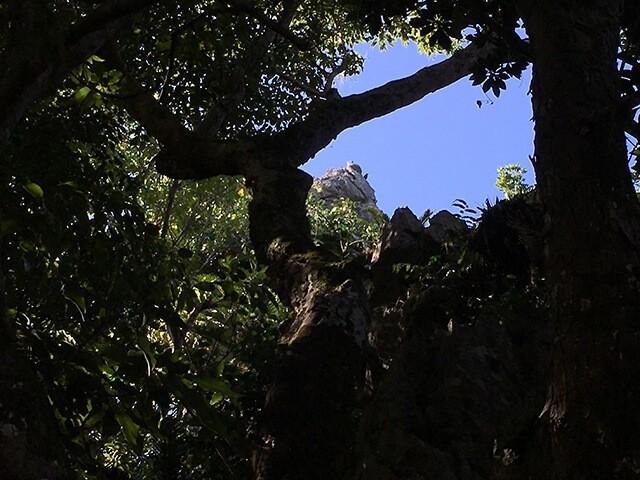 大石林山・猫岩1