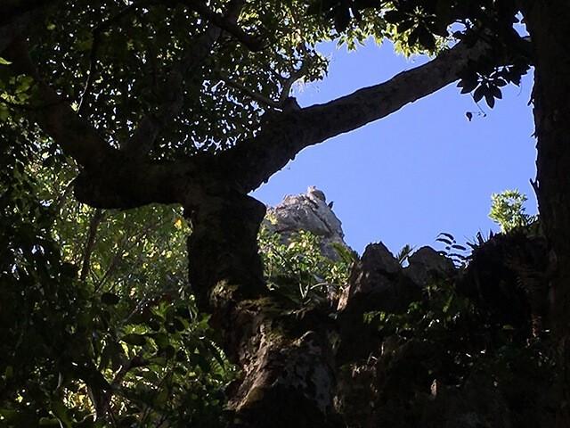大石林山・猫岩2