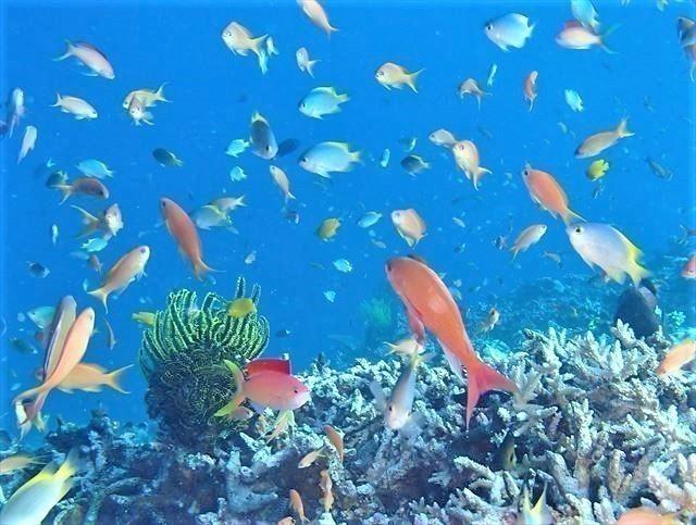 八重干瀬の魚