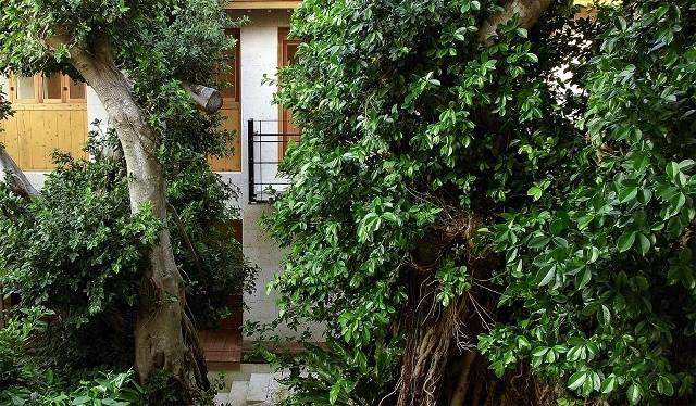 百名伽藍 ガジュマルが生い茂る中庭
