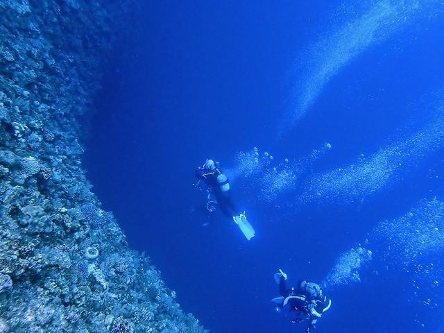 久米島 ダイビング ウーマガイを泳ぐダイバー