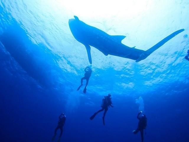 久米島 ダイビング ジンベイザメ