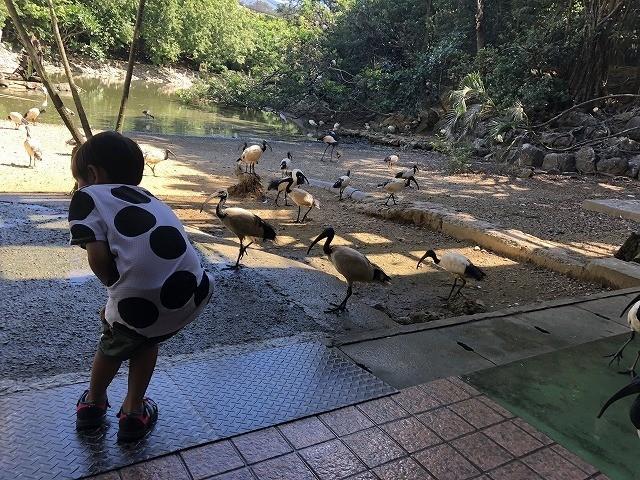 ネオパークオキナワ 鳥と戯れる子ども