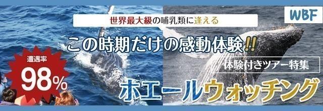沖縄 ホエールウォッチング バナー