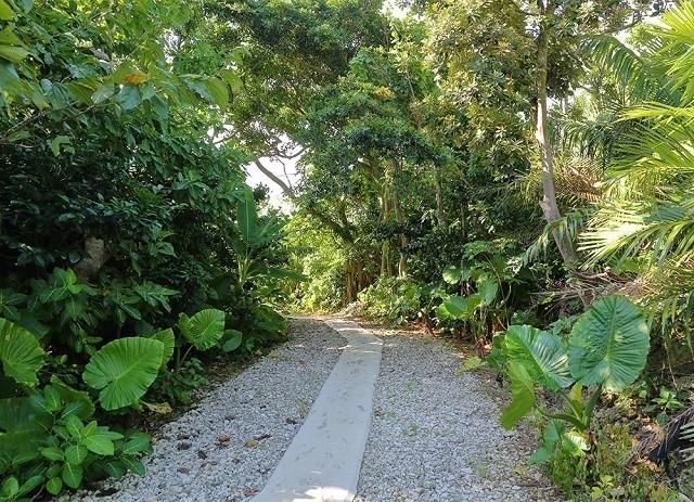 ユサンディ 敷地内に自生する 亜熱帯植物