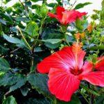 沖縄で見られる南国の花を愛でよう