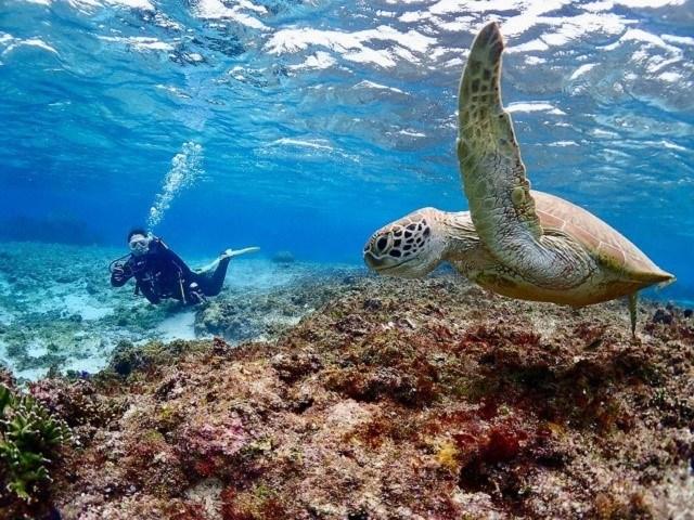 宮古島 地形ダイビング ウミガメと一緒に泳ぐダイバー