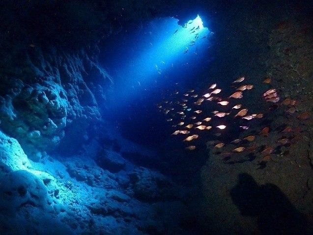 宮古島 地形ダイビング 洞窟の中で泳ぐ魚の群れ
