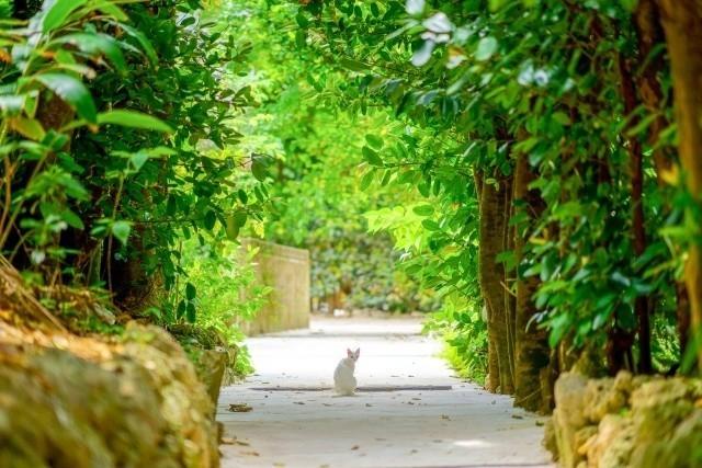 沖縄 Googleストリートビュー 振り返る白猫