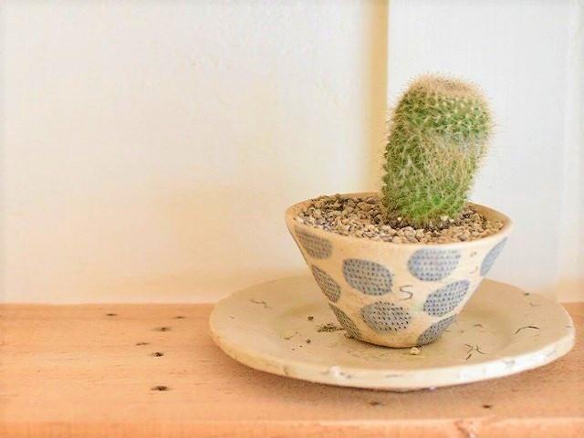 bonoho やちむん 個性的な器をサボテン鉢に見立てて