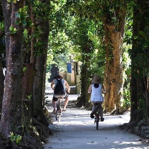 沖縄 インスタ映え カップル旅 備瀬のフクギ並木 サイクリング