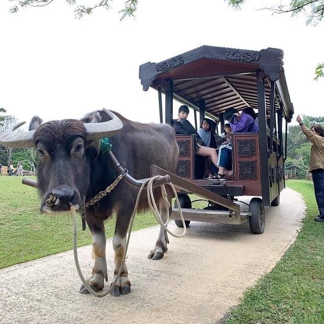 沖縄 インスタ映え 家族旅 ビオスの丘 水牛車に乗って家族写真