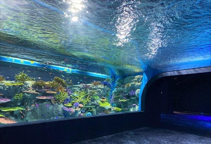 沖縄 DMMかりゆし水族館 水槽