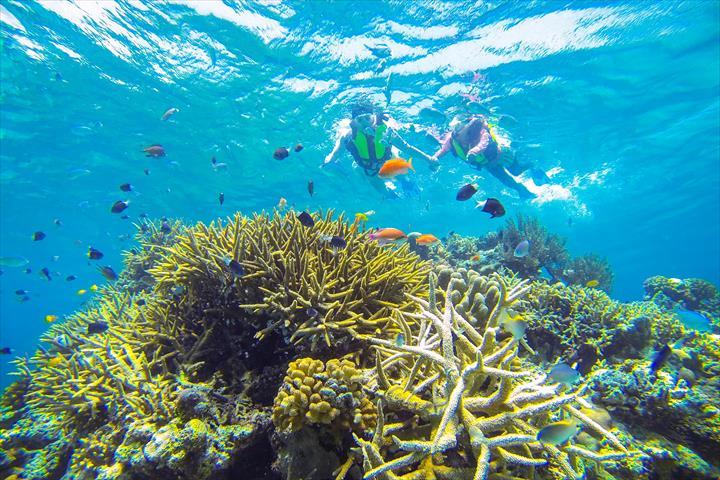 リゾナーレ小浜島 石西礁湖