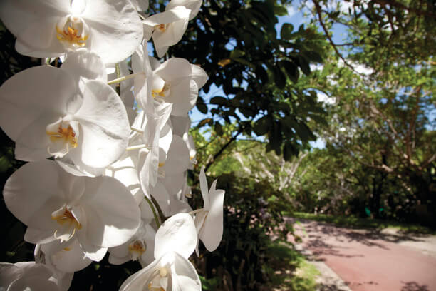 沖縄 12月 イベント 花のクリスマス