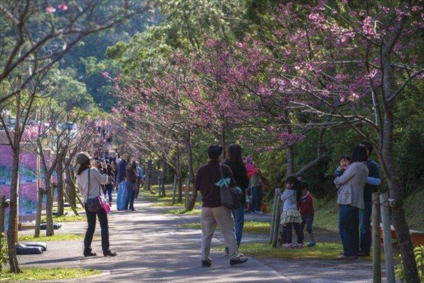 沖縄 1月 イベント 桜まつり