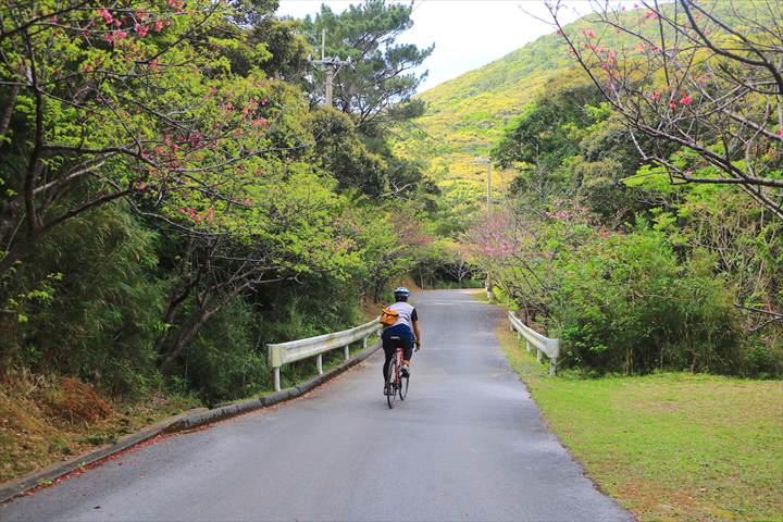 久米島 一周 アーラ林道