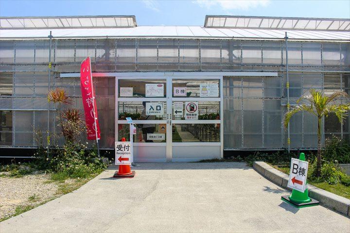 美らイチゴ ビニールハウス 入口