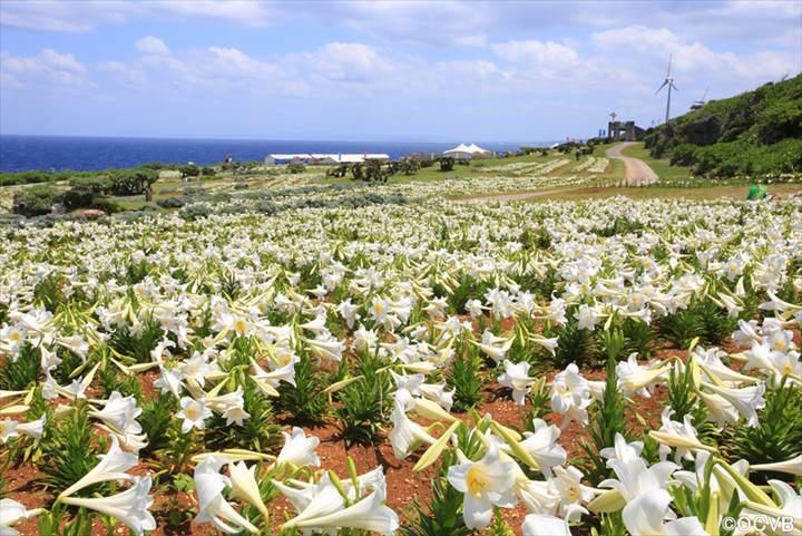 伊江島の観光スポット|沖縄本島から船で30分の島旅