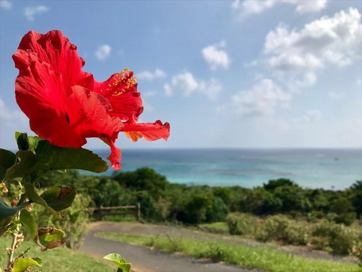 沖縄 風景 赤花