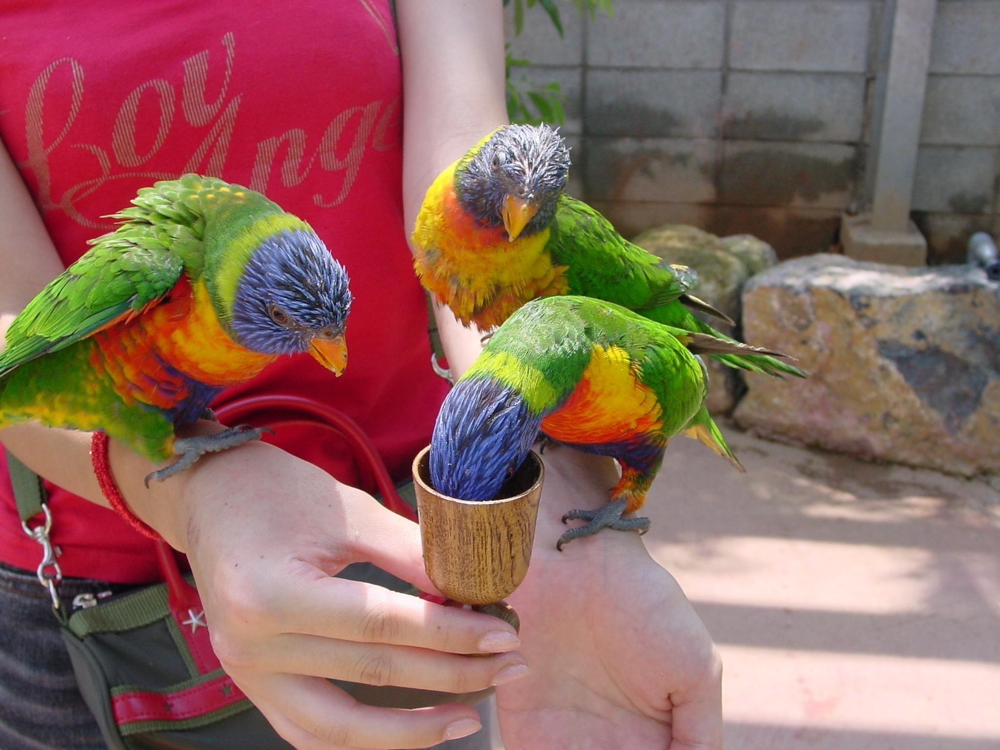 沖縄に生息する珍しい鳥