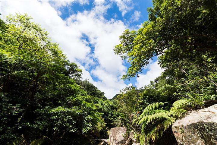 沖縄 琉球弧 世界遺産 自然 イメージ