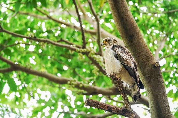 沖縄 琉球弧 世界遺産 自然 カンムリワシ